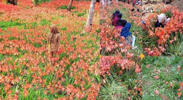 taman bunga amaris rusak parah